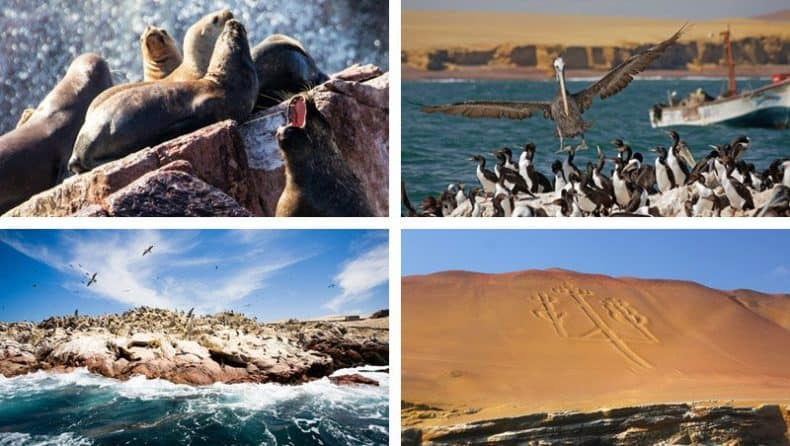 Scenic photography and wildlife on The Ballestas Islands