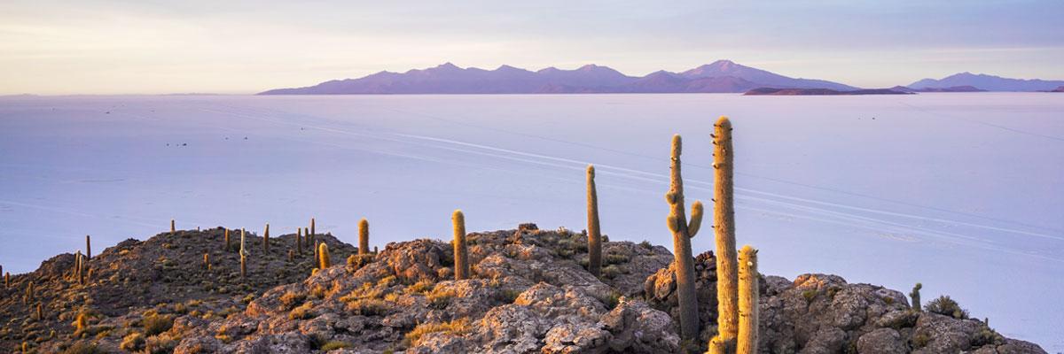 Uyuni Bolivia - Incahuasi Island