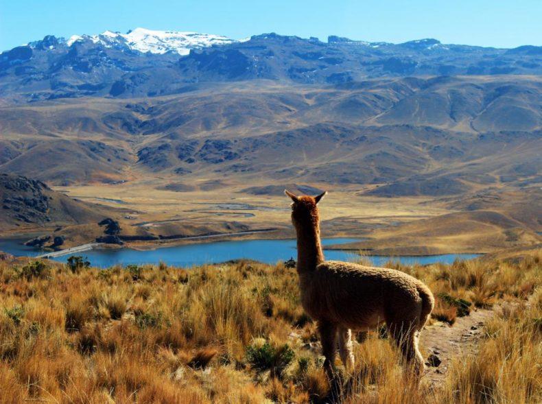Llama Peru tours