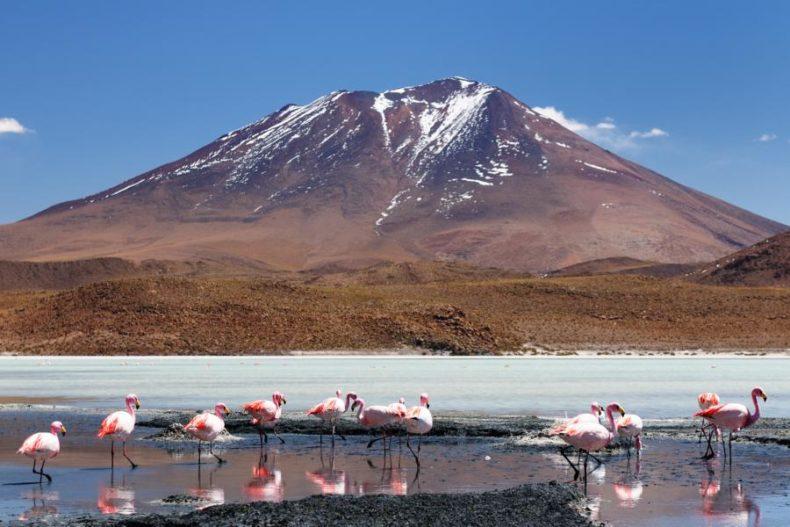 best places to visit in bolivia - La Laguna Colorada