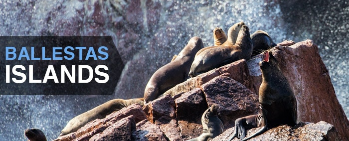 Sea lions lying on rocks by The Ballestas Islands