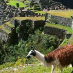 Inca Jungle Trek a Machu Picchu