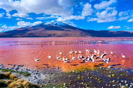 Uyuni Bolivia - Colorada Lagoon with flamingos
