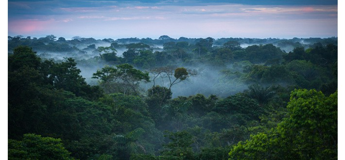 Amazon Rainforest Bolivia